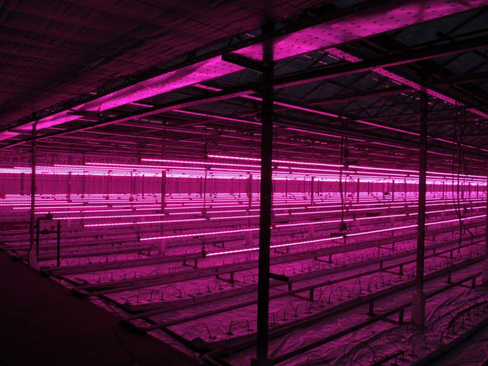 led grow lights the right led greenhouse lighting. Black Bedroom Furniture Sets. Home Design Ideas