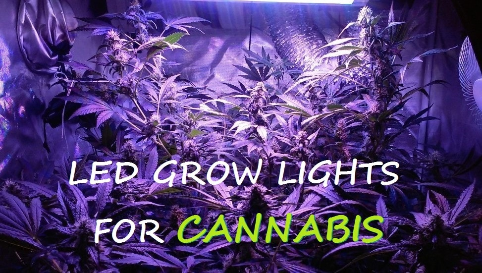 led grow lights cannabis