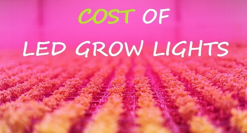 led grow lights cost